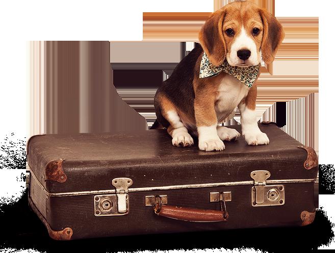Doggidivas Doncaster Dog Kennels Luxury Pet Hotel